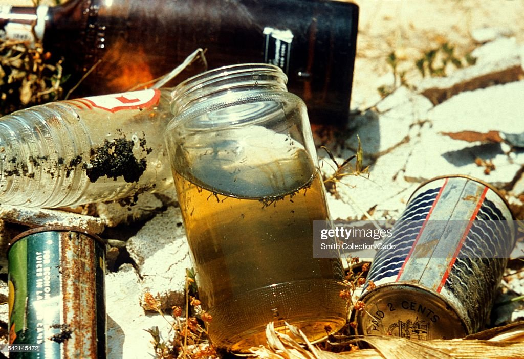 Domestic mosquitoes are seen here breeding in jars of rainwater 1975 Domestic species are those that breed close to human habitation Here we see jars...