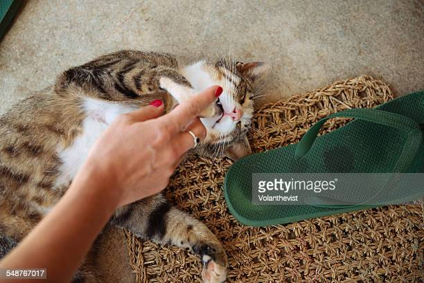 Domestic tabby cat playing and purring in a house