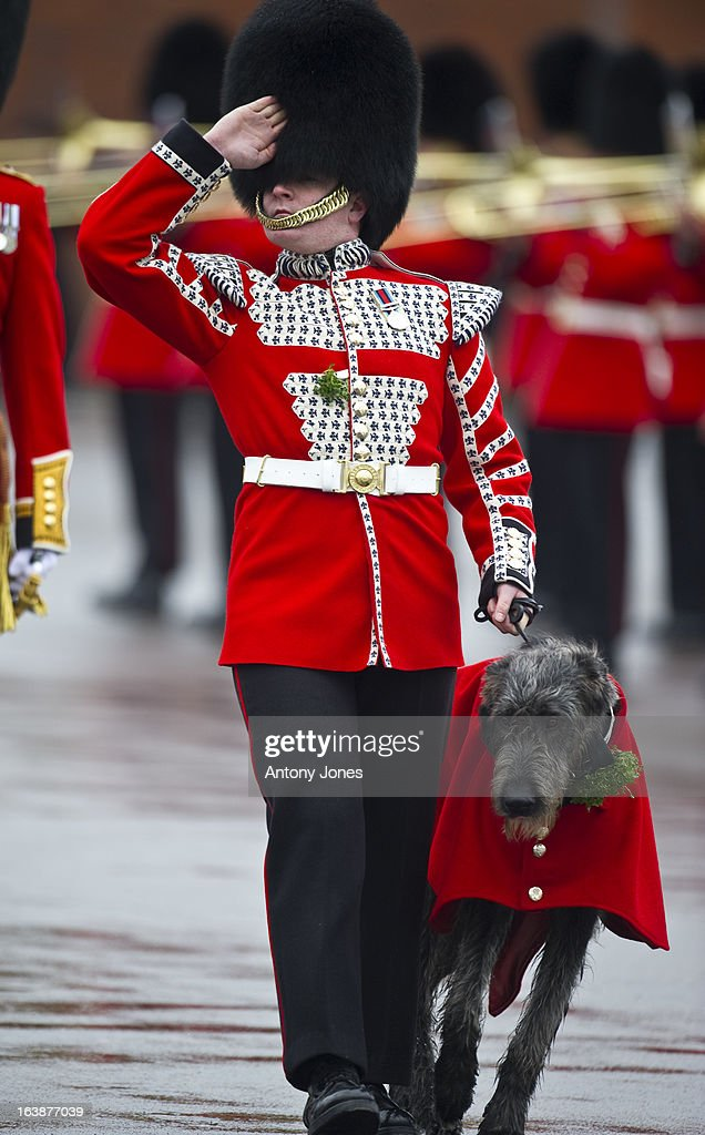 Domhnall (pronounced Donal) is a 8 month old Irish Wolfhound, the 16th Regimental Mascot to 1st Battalion Irish Guards attends the Irish Guards' St Patrick's Day Parade at Mons Barracks on March 17, 2013 in Aldershot, England.