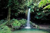 Dominica Rainforest Emerald Pool Waterfall