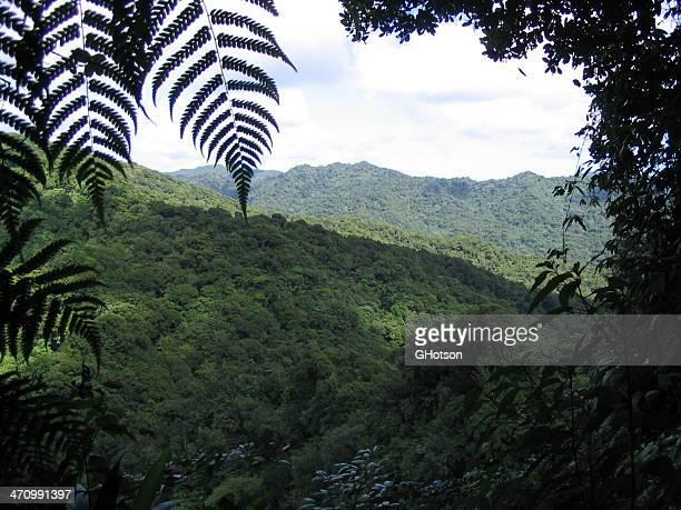 Dominique forêt tropicale