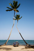 Dominican Republic, Puerto Plata, boat on beach between two plam trees