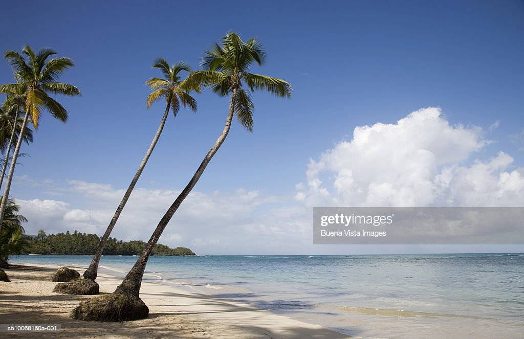 Dominican Republic, Puerto Plata, palm trees on beach : Stock Photo