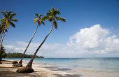 Dominican Republic, Puerto Plata, palm trees on beach