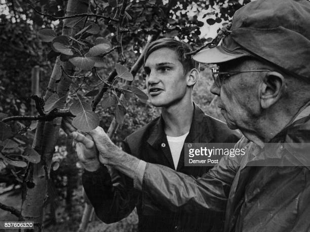 Don Mauck of Denver 'sees' what a Colorado aspen tree looks like with the aid of Dr E H Brunquist curator of botany at the Denver Museum of Natural...