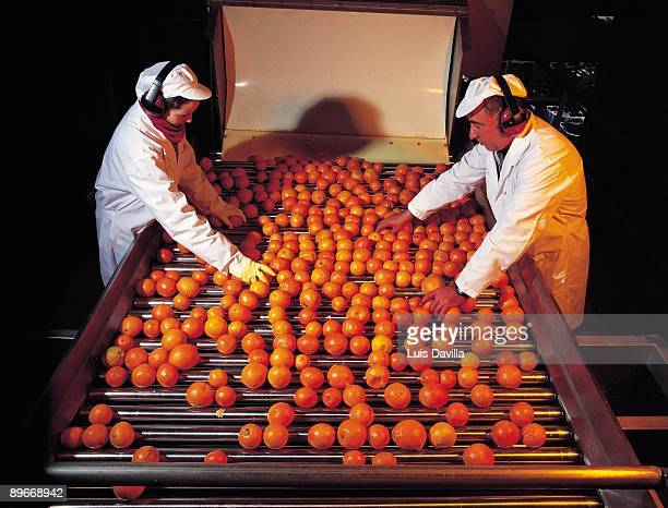 Don Simon juice factory Two worker in the production line selecting the oranges