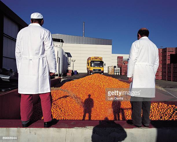 Don Simon juice factory Two workers wash a mountain of oranges with hoses