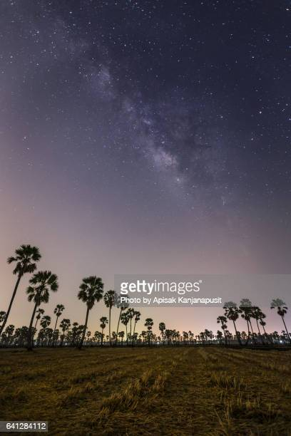 Dong Tan (sugar palm tree) with Milky Way