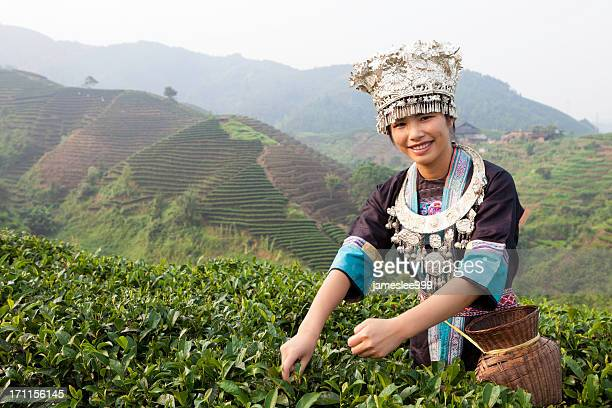 Dong Tribe Tea Picker