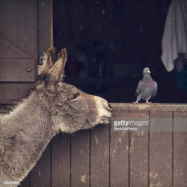 Donkey and pigeon in the rain