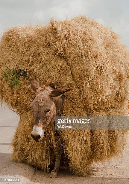 Donkey carrying huge hay bail