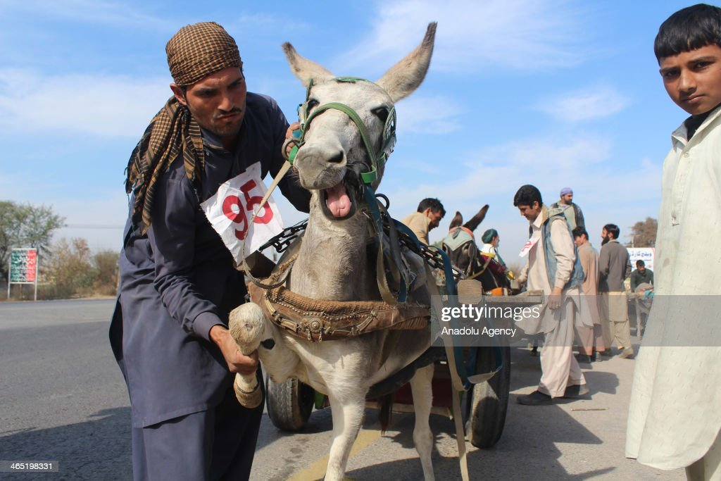 Donkey cart race is the traditional sports of Gujar Khan and every year such events held in the area and prizes are distributed among the winners in Rawalpindi, Pakistan, on January 26. In this race two opponents compete along a 4-km straight road and firstly arrived win the prize.