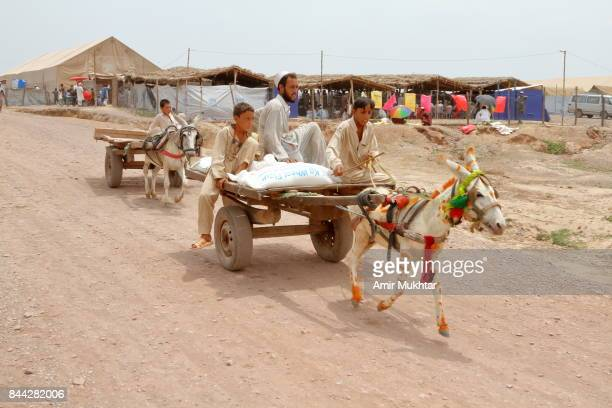 Donkey Cart To Carry The Heavy Bags Or Things