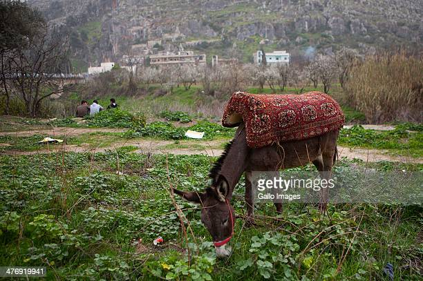 A donkey grazes on the bank of the Orontes river on March 3 inDarkoush Syria More than 20 000 people have lost their lives since uprisings boke out...