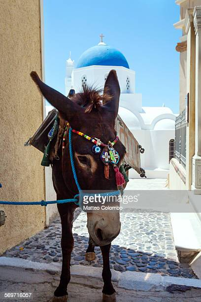 Donkey in front of blue domed church, Santorini