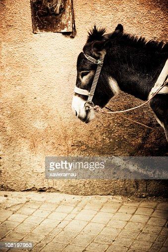 Donkey in the Medina