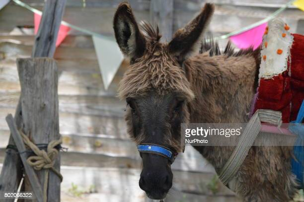A donkey is seen at Cheerful Village in Ankara Turkey on June 27 2017 Mostly families and children visit the village to enjoy the holiday on the last...