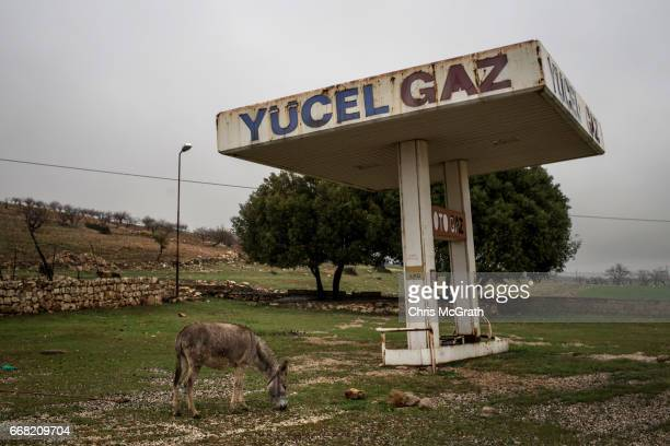 A donkey is seen eating grass at an old petrol station on April 13 2017 at Mount Nemrut Turkey Campaigning by both the 'Evet' and 'Hayir' camps has...