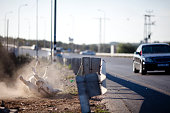 A donkey is seen tied to a road pole on December 01 2010 near the West Bank town of Qalqilya Since 2000 SHADH have rescued over 1000 donkeys and...
