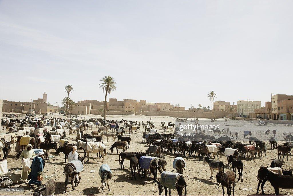 Donkey market : Stock Photo