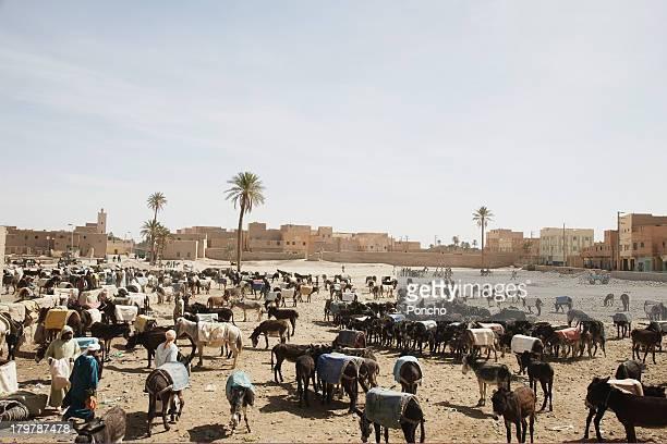 Donkey market