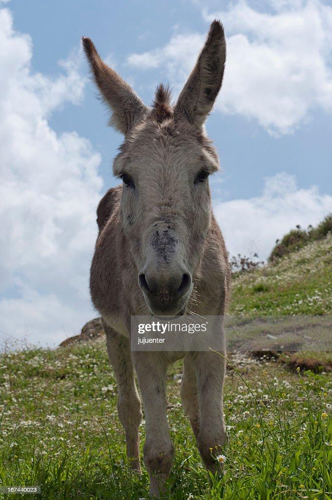 Donkey : Stock Photo