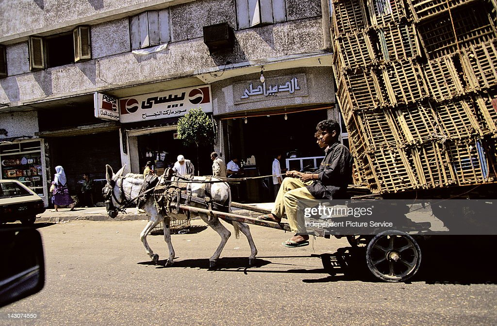 Image result for little donkey pulling cart in cairo