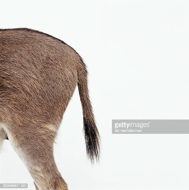 Donkey, rear section
