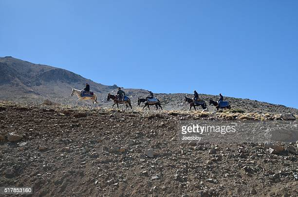 Donkey Riders on the Ridge in Toubkal Morocco