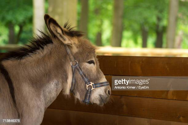 Donkey Standing At Stable