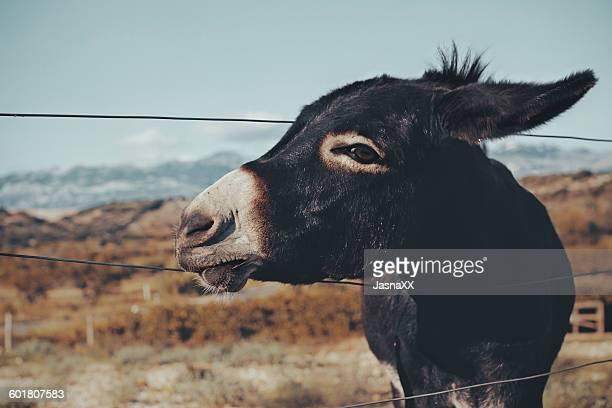 Donkey standing in a field, Novalja, Croatia