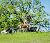 Donkey Standing On Grassy Field Against Trees During Sunny Day