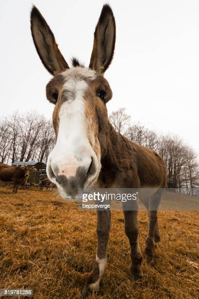 Donkey staring at you
