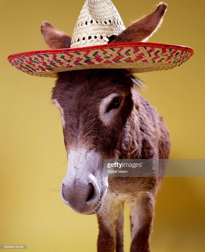 Donkey (Equus hemonius) wearing straw hat : Stock Photo