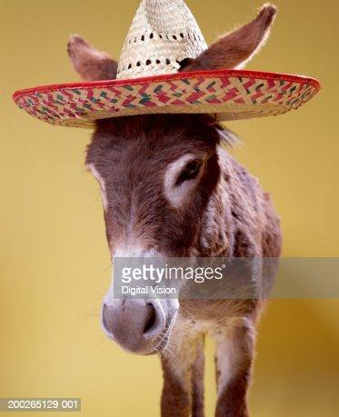 Donkey (Equus hemonius) wearing straw hat