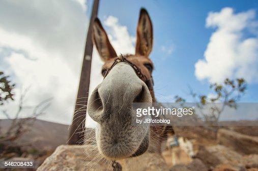 Donkey wide angle