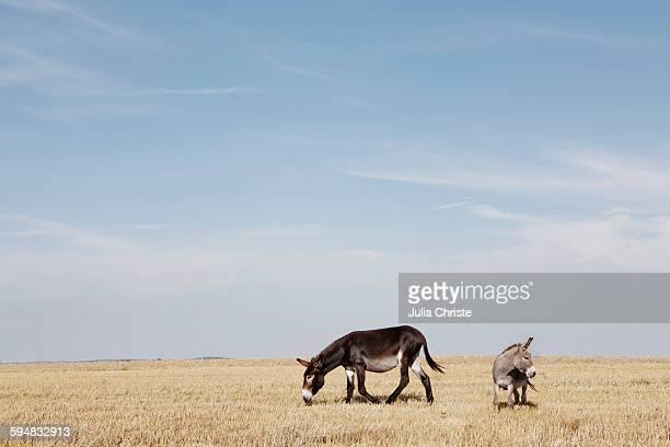 Donkeys grazing on field against sky