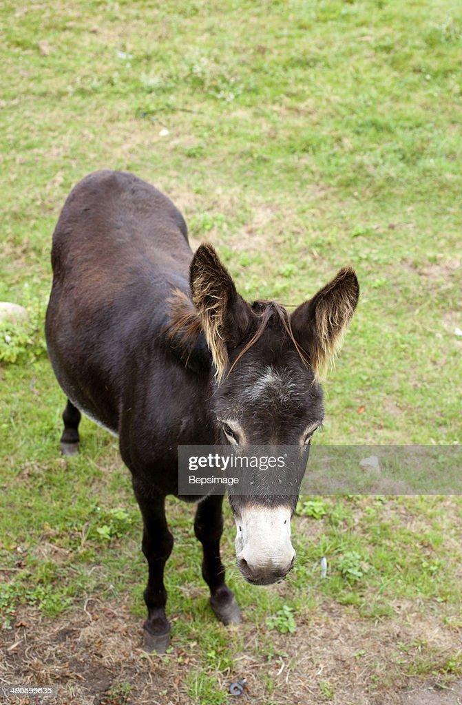 Donkeys grazing : Stock Photo