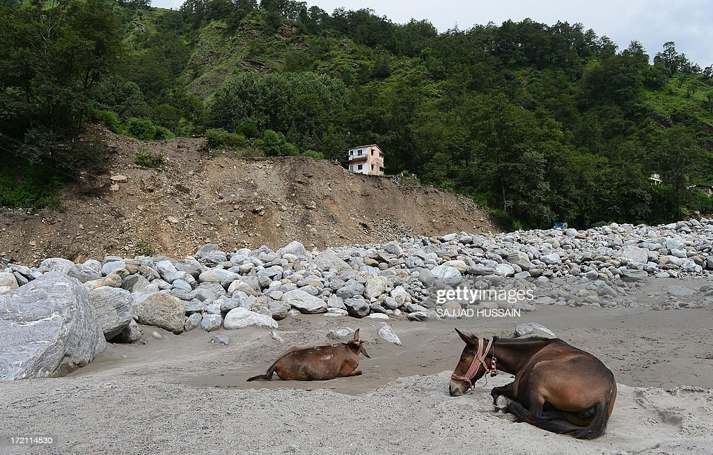 Donkeys lie in front of damaged houses in Sonprayag on July 2, 2013, in a flood affected area of the northern Indian state of Uttrakhand. Construction along river banks will be banned in a devastated north Indian state amid concerns unchecked development fuelled last month's flash floods and landslides that killed thousands, the state's top official said. The Chief Minister of Uttarakhand, Vijay Bahuguna, also announced that a regulatory body would be set up to scrutinise future construction as the Himalayan state begins the herculean task of rebuilding following the June 15 floods.