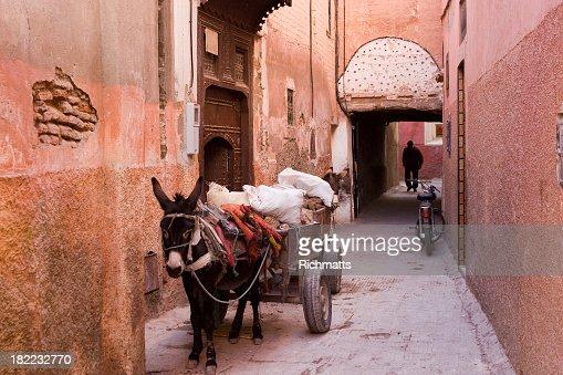 Donkeys of Marrakesh