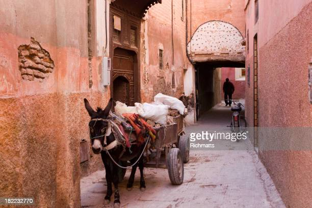 Donkeys of Marrakesh