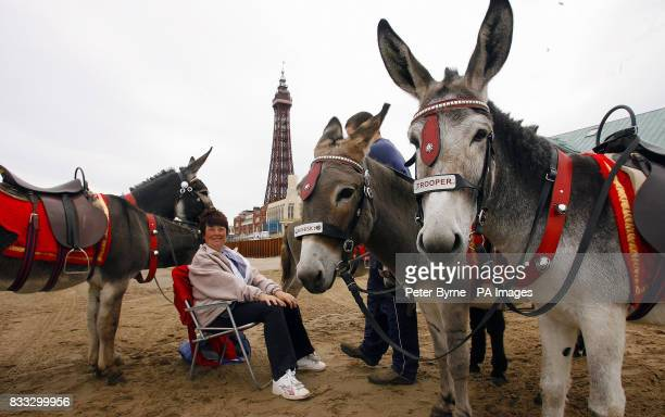 Donkeys on Blackpool beach as most of Britain experiences warm weather