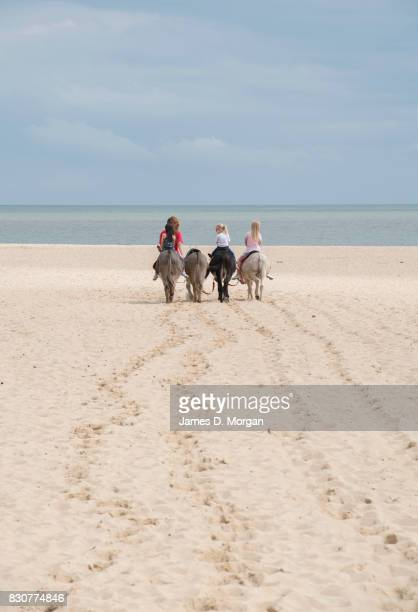 Donkeys take visitors for rides on August 12 2017 in Great Yarmouth England A cloudy overcast day greeted visitors to the Norfolk seaside town on one...