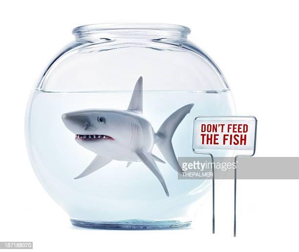 Keine Füttern der Fische