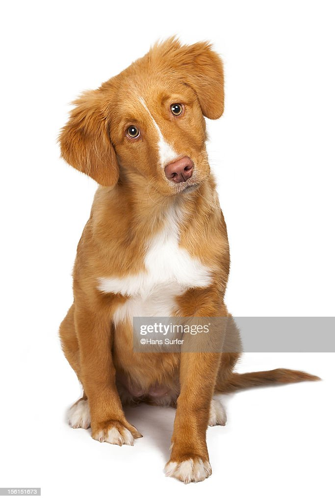 Don't leave me that way! [Toller] : Stock Photo
