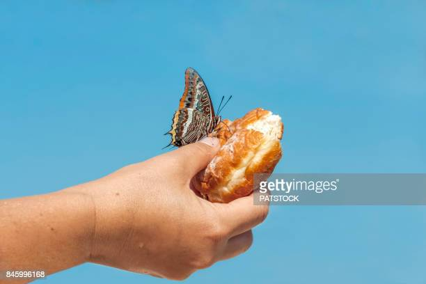 Donut with butterfly
