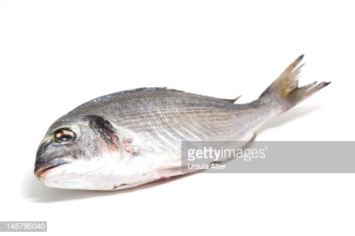 dorade : Stock Photo