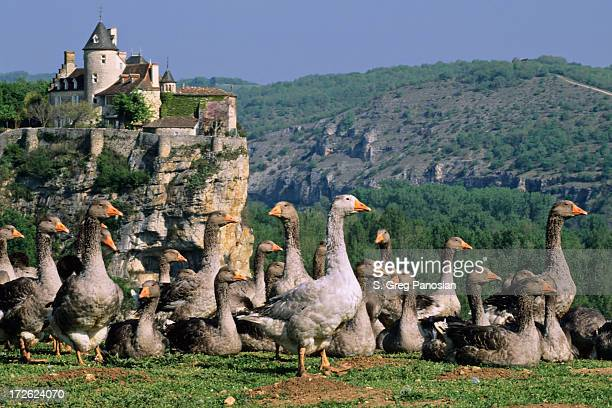 Dordogne Postcard