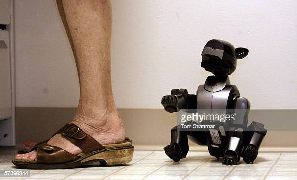 Dorothy Light works in her kitchen as her robotic dog Bebe plays and watches on the floor behind her on February 28 2006 in West Lafayette Indiana