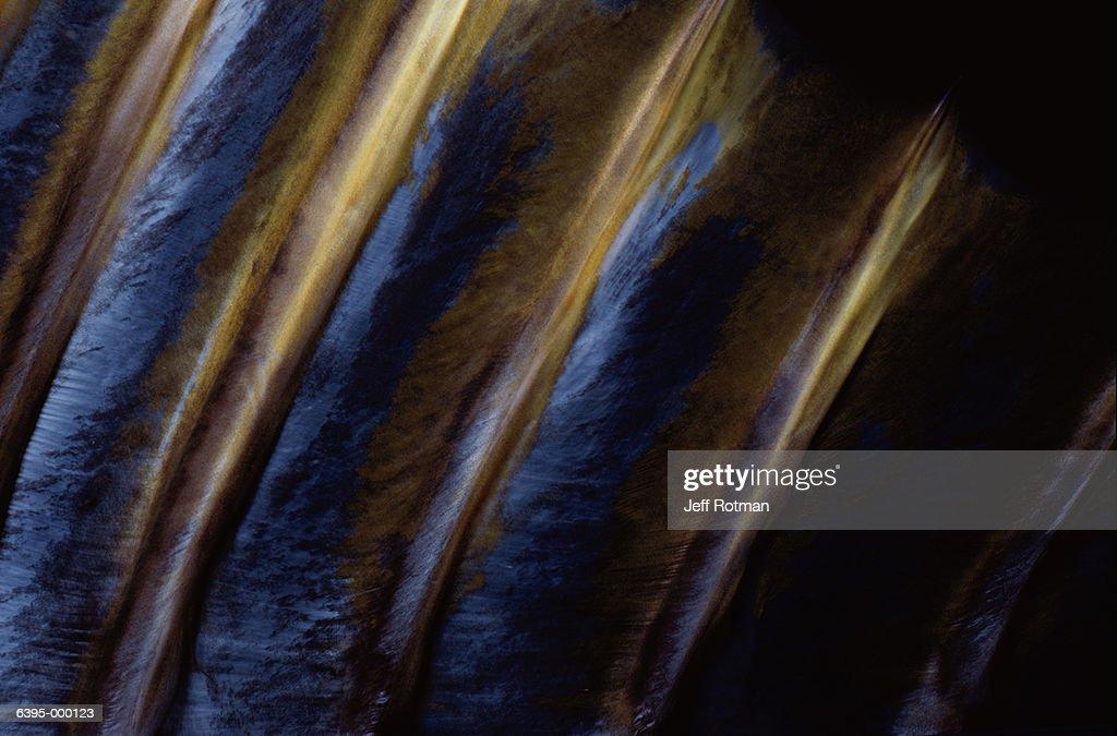 Dorsal Fin of Yellowfin Tuna : Stock Photo